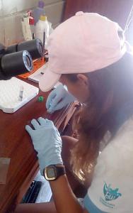 Daniela realizando o esfregaço sanguíneo
