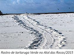 rastro de tartaruga verde das rocas - 3º Diário de Bordo