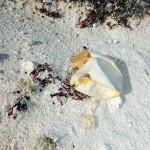 Ovo eclodido de tartaruga marinha