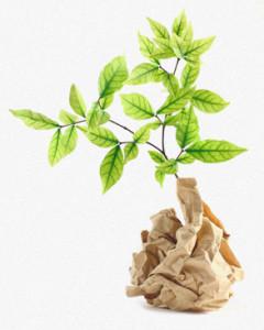Sustentabilidade através de uma gestão florestal responsável.