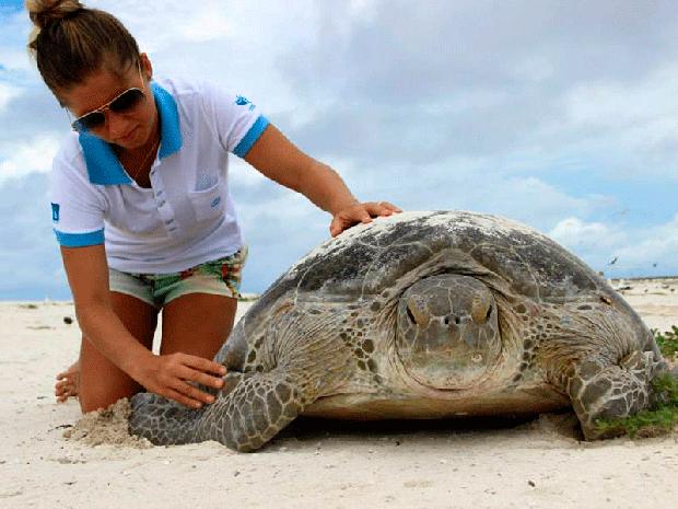 Pesquisadora examina tartaruga-verde que havia acabado de desovar no Atol das Rocas.