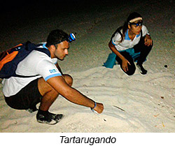 atol_tartarugando