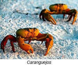 caranguejos Diário de Bordo
