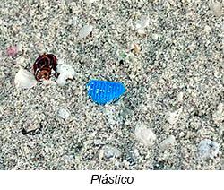 pedaço de plastico - 14° Diário de Bordo