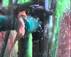 nascimento-de-cavalos-marinhos