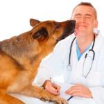 Cão e veterinário
