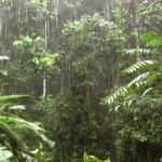 A chuva na floresta
