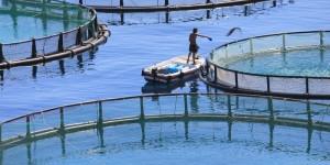 Tanque no mar para cutivo de peixes