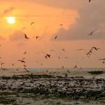 Ninhal de aves com pôr do sol ao fundo