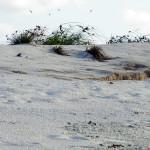 Ninho destruído pela maré