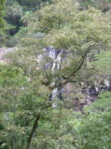 Floresta estacional decidual