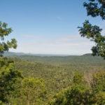 Floresta estacional semidecidual