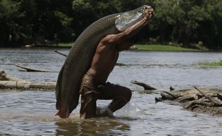 Pesca do Pirarucu