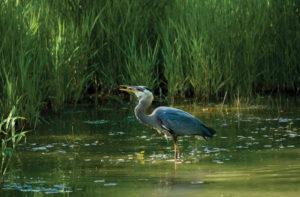 Fauna nas áreas úmidas