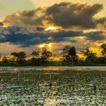 Por do sol no Pantanal