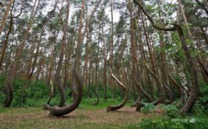 A Floresta de Árvores Tortas
