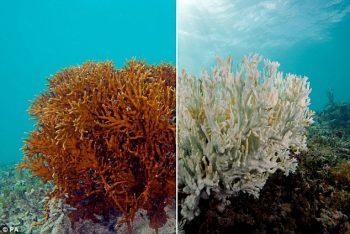 Branqueamento corais