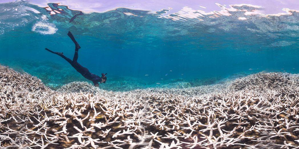 Imagem mostrando branqueamento dos corais