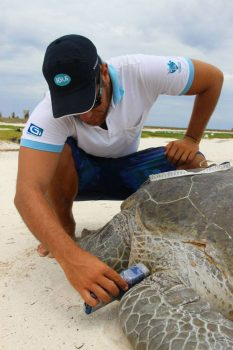 Tartaruga passando leitor co microchip