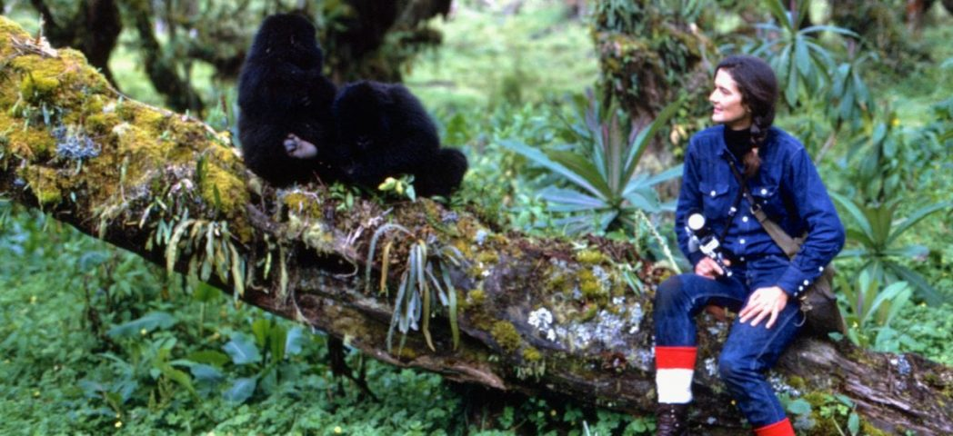 Dian fossey e os gorilas