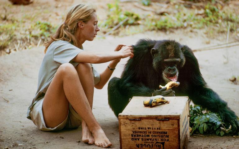 jane goodall e chimpanze