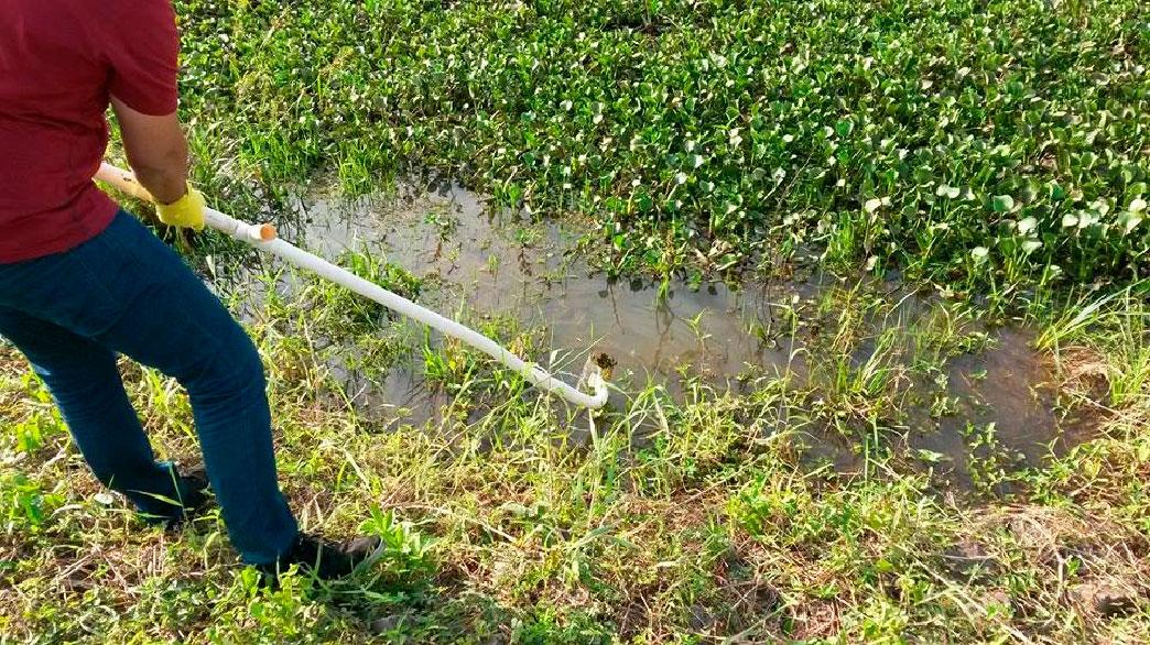 Figura 2 – Procedimento de amostragem das plantas aquáticas (Foto: Igor Fernandes).