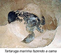 tartaruga fazendo a cama - 6º Diário de Bordo