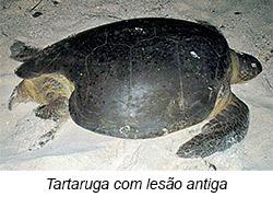 Tartaruga com lesão - 6º Diário de Bordo