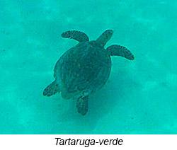 tartaruga diario de bordo - 15° Diário de Bordo