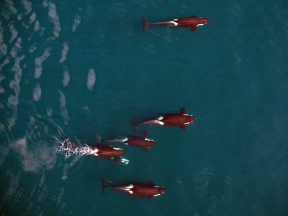 Figura 3. Gravidez comprovada pela fotografia. Fonte NOAA