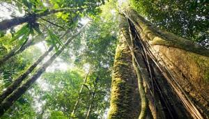 a floresta