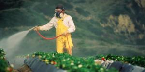 aplicação agrotóxicos
