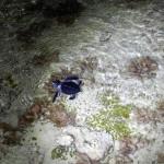 Filhotes de tartarugas marinhas_3