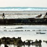 Restos de naufrágios