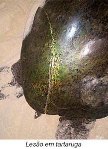 lesão em tartaruga