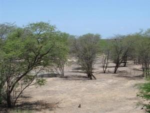 Paisagem da Caatinga