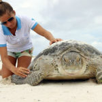 Examinando-a-tartaruga verde