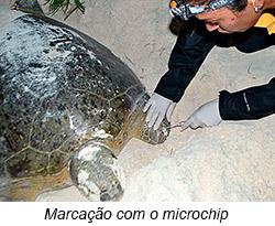 Marcação com Microchip