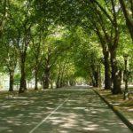 Ávores urbanas