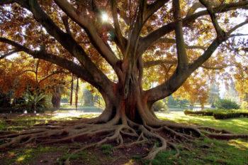 raiz da árvore