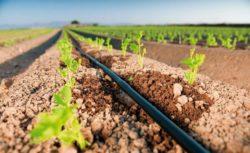 gotejamento - irrigação