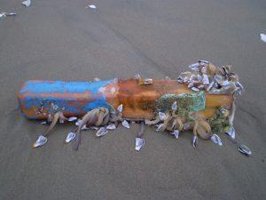 Moluscos em detritos não biodegradavel