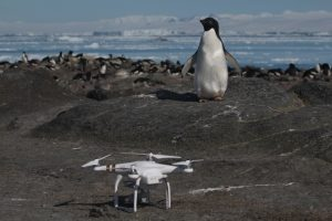 Pinguim e o drone