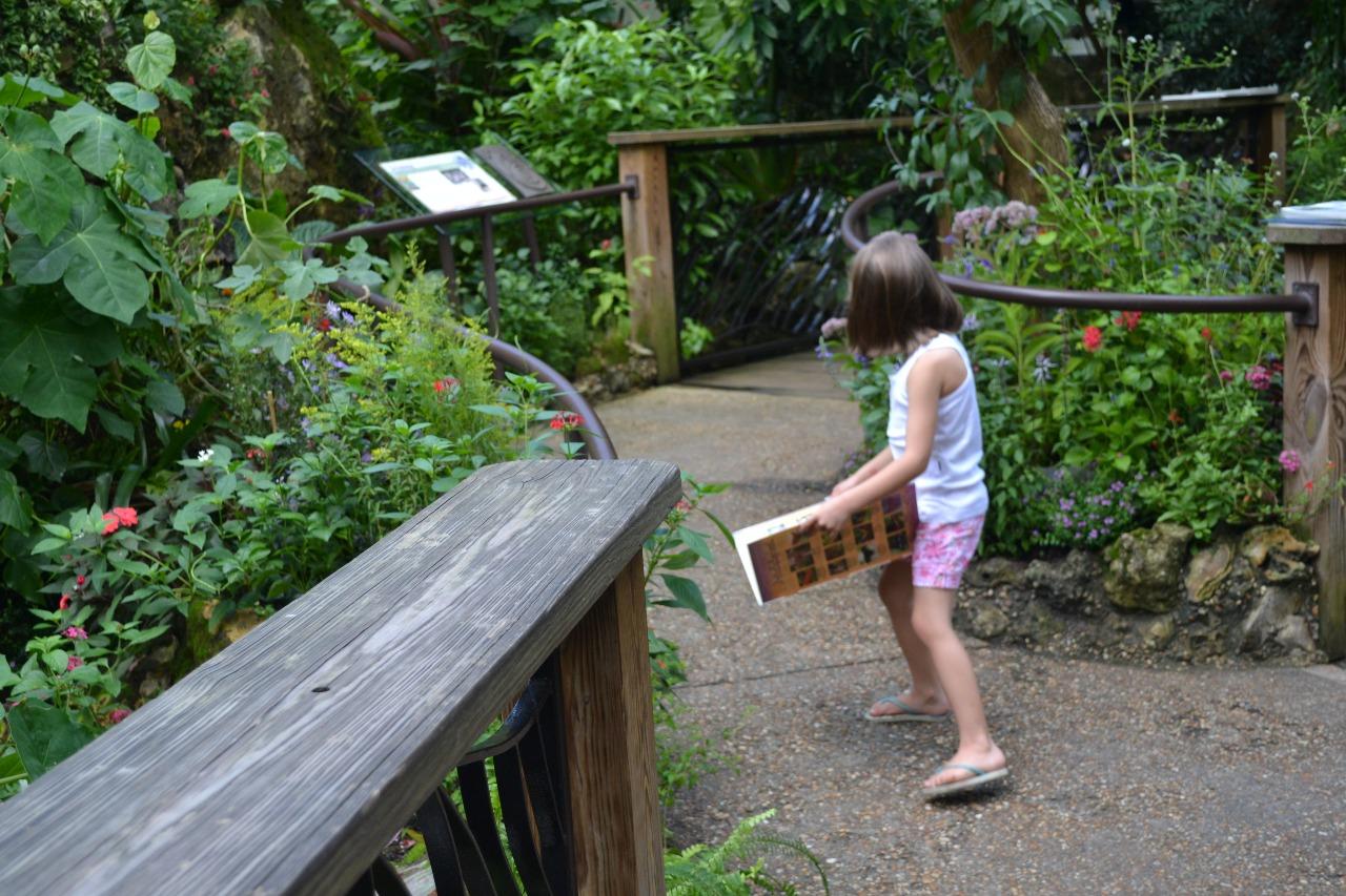 Crianças identificando borboletas com guia