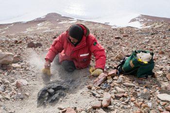 pesquisador encontrando tronco de árvore fossilizada