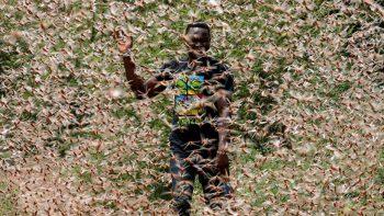 gafanhotos no Quenia foto DAI Kurokawa_EFE