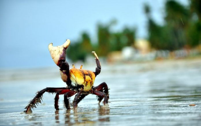 Manguezal e o impacto das ondas! - iGUi Ecologia