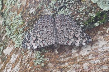 22 de maio dia da Biodiversidade