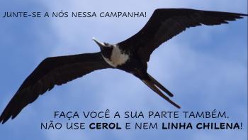 Cerol - Ameaça às Aves Marinhas