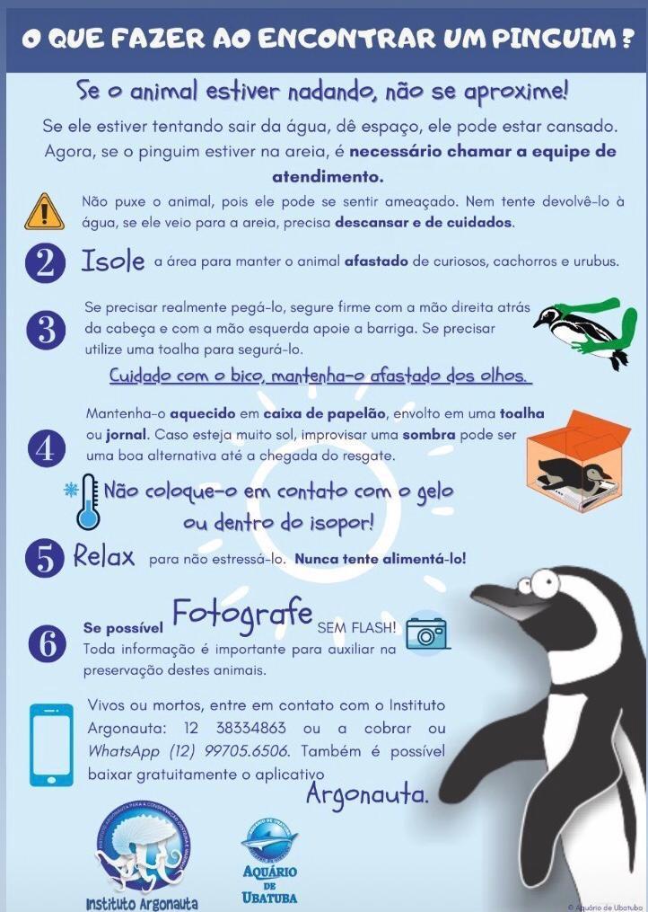 Informativo sobre os Pinguins